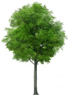 В листве деревьев
